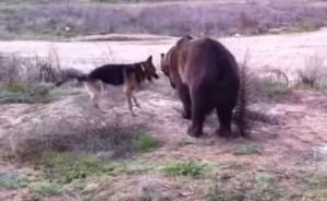 urso-cao4