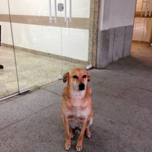 cachorro-hospital-cardoso-fontes