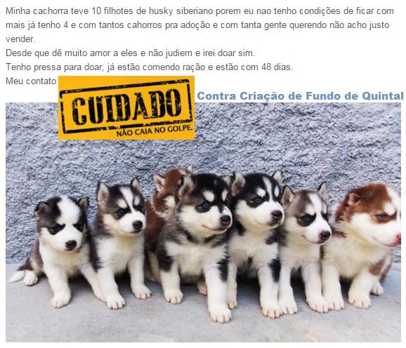 golpe-doacao-cachorro-2